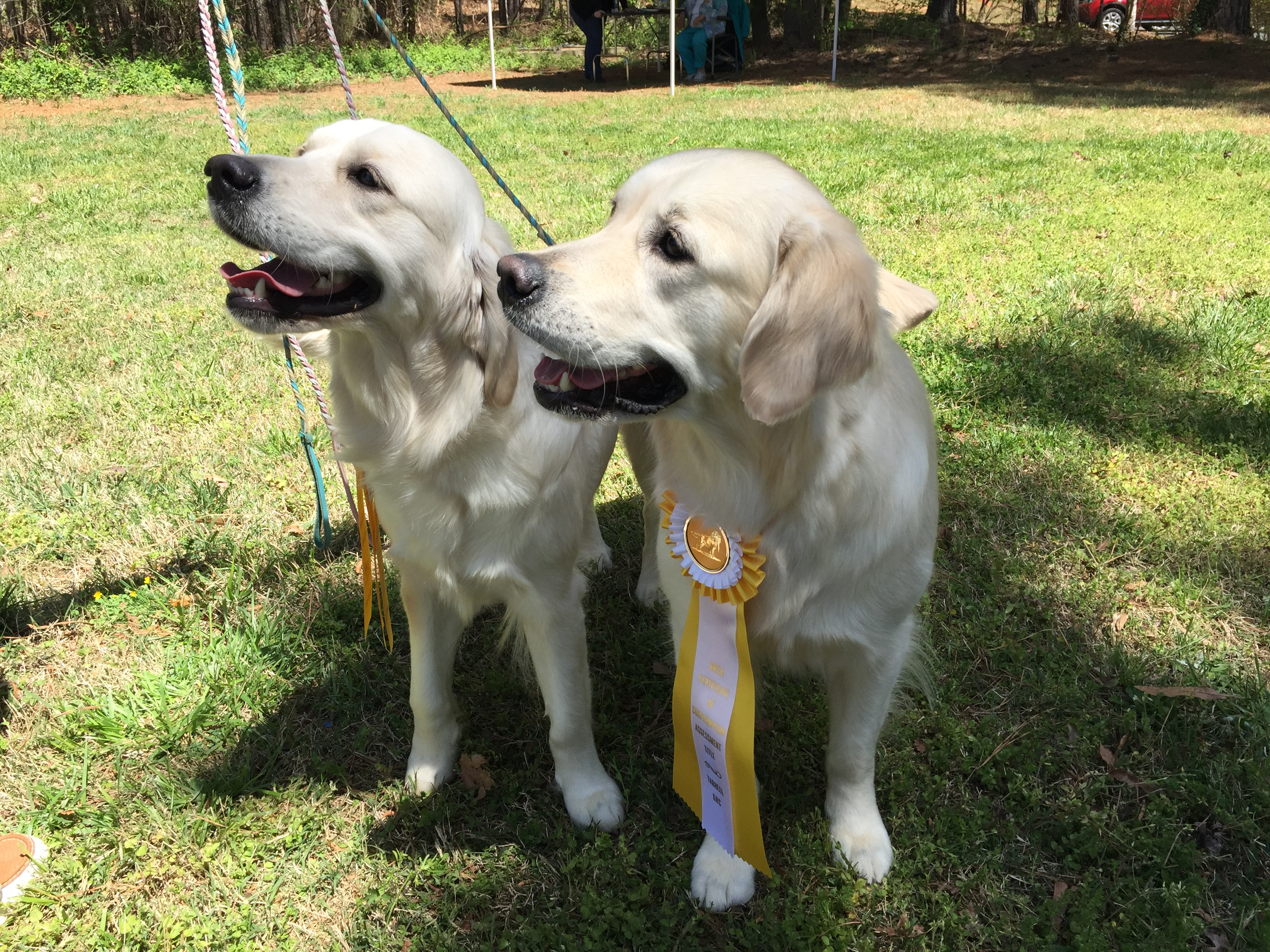 JoJo (right) earned her Certificate of Conformation Assessment, April 2017