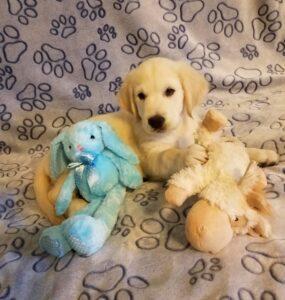 Jamie puppy